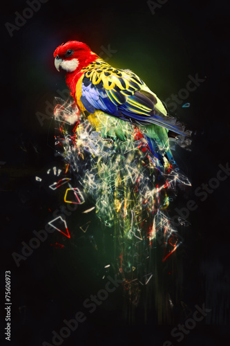 Parrot, abstract animal concept