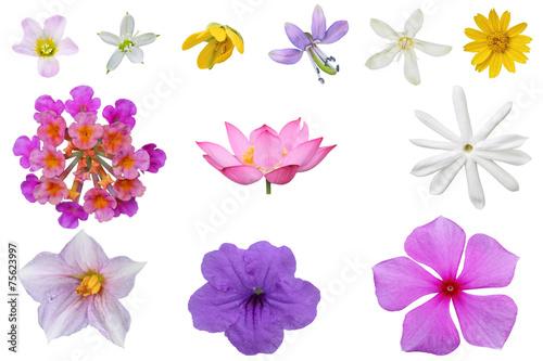 Tuinposter Vlinders Wildflower Set