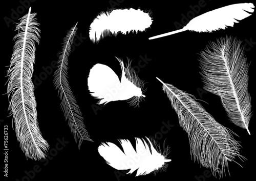 osiem piór sylwetki na czarnym tle