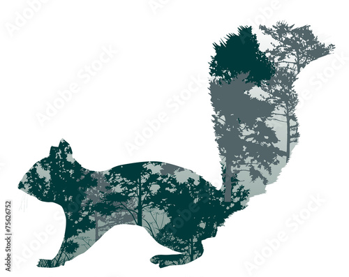 wiewiorka-z-drzewa