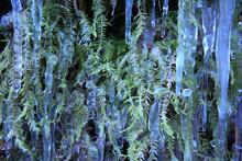 Vegetazione In Inverno Cristal...