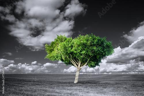 Naklejki na meble Zielone drzewo na czarno białym tle