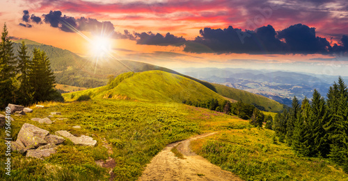 Canvas Prints Honey pine trees near valley in mountain at sunset