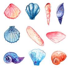 Watercolor Sea Shells. Vector Illustrations