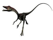 Compsognathus Dinosaur - 3d Re...