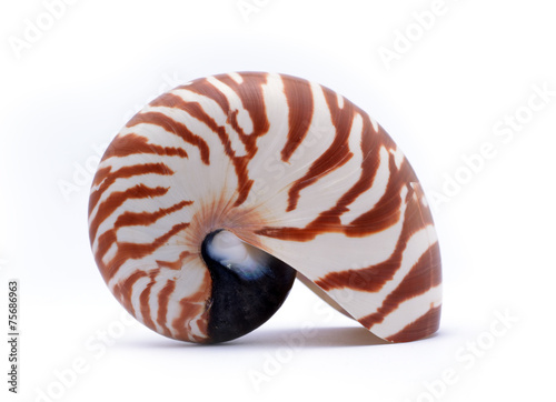 Valokuva  Nautillus shell