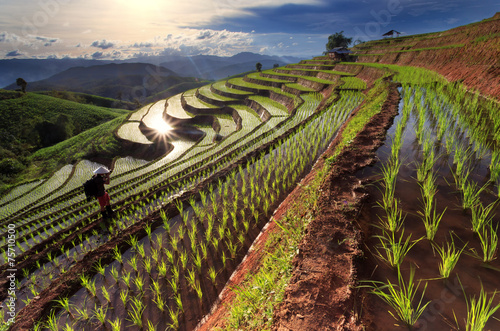 Aluminium Prints Rice fields Rice fields on terraced at Chiang Mai, Thailand