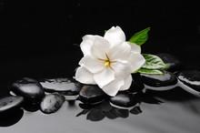 White Flower  On Black Stones ...