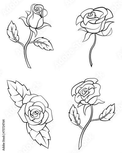 kolekcja-kwiat-rozy