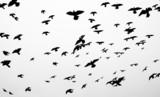 Sylwetki ptaków - 75727754