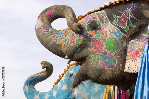 Colorful hand painted elephants, Holi festival, Jaipur, Rajasthan, India Canvas Print