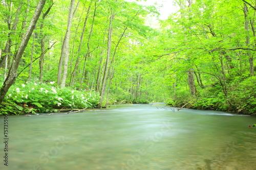 Slika na platnu Summer of Oirase Stream, Aomori, Japan