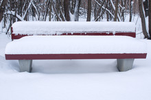 Red Bench In Winter Forest