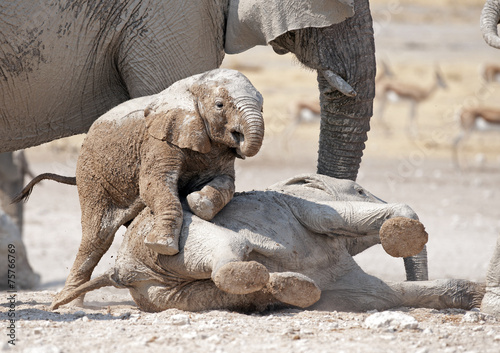 young elephants playing. Canvas Print