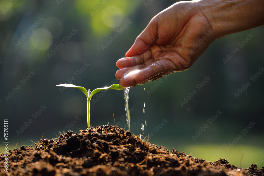 Fototapety, obrazy: Farmer's hand watering a young plant