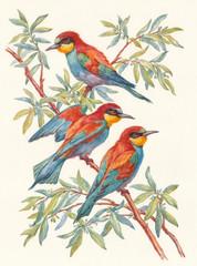 Fototapeta Три яркие птицы, акварель.
