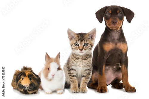 Haustiere - Pets © DoraZett