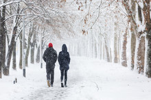 Couple Walking During Heavy Snowstorm On The Alley Under Tree