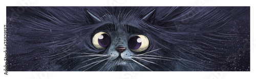 Fototapeta gato en primer plano