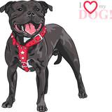 Ilustracja Staffordshire Bull Terriera