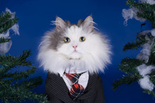 Cat Wearing A Tie And A Suit Against The Backdrop Of Snow-covere