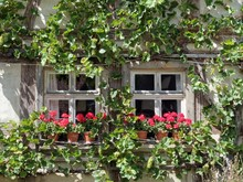 Haus Mit Weinstock
