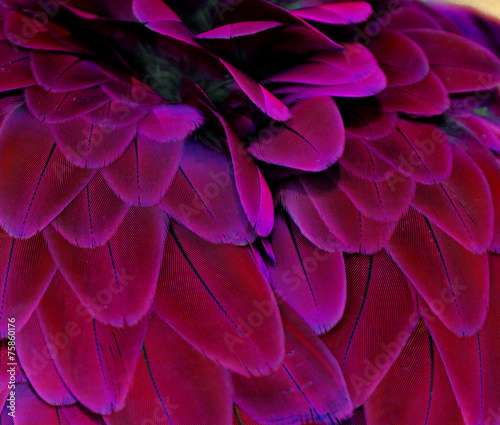 Fotografia, Obraz Pink and Purple Feathers