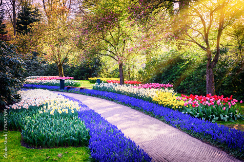 In de dag Grijze traf. Spring landscape with colorful flowers