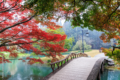 Fototapety, obrazy: beautiful park in autumn