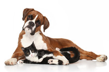 Cat And Dog Together Lying On ...