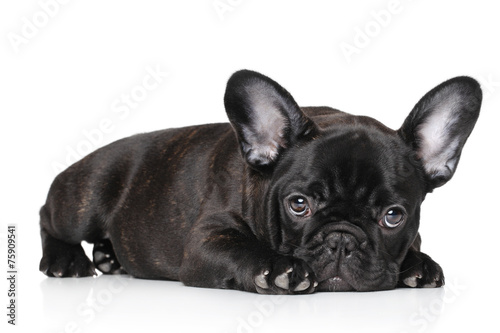Deurstickers Franse bulldog Black French bulldog puppy
