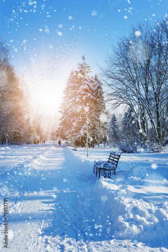 Keuken foto achterwand Bossen Beautiful winter landscape with snow covered trees