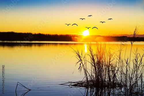puesta de sol entre las plantas del lago