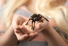 Girl Holding A Large Spider On...