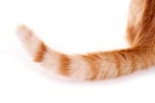 Detailaufnahme Katzenschwanz
