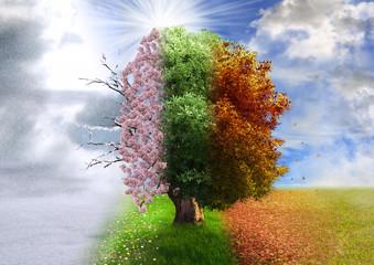 Four season tree, photo manipulation, magical, nature