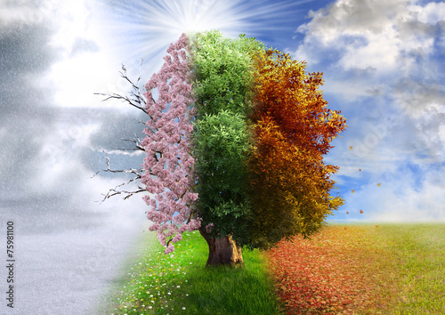 Stampa su Tela  Four season tree, photo manipulation, magical, nature