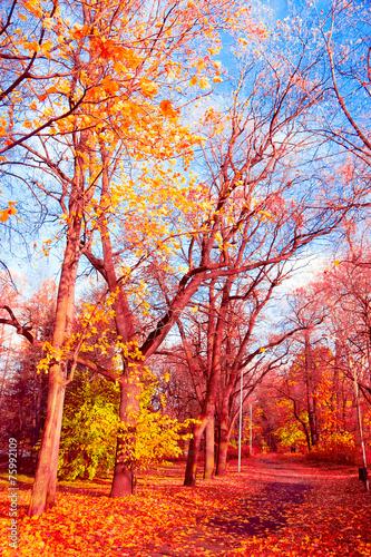 Cadres-photo bureau Marron Woods Landscape Idyllic Nature