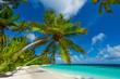 Rest in Paradise - Malediven - Palmen am Strand