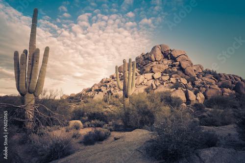 Photo  Wild desert landscape