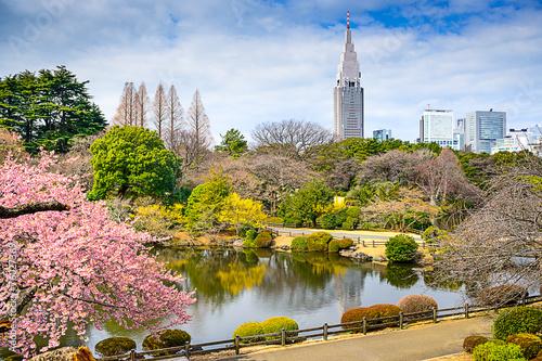 Foto auf AluDibond Tokio Shinjuku Gyoen Park, Tokyo, Japan in the Springtime