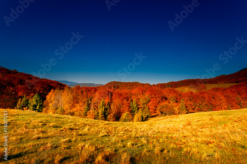 Poster Nachtblauw Colorful autumn landscape
