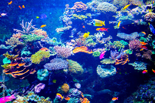 Photo Stands Coral reefs Colorful aquarium