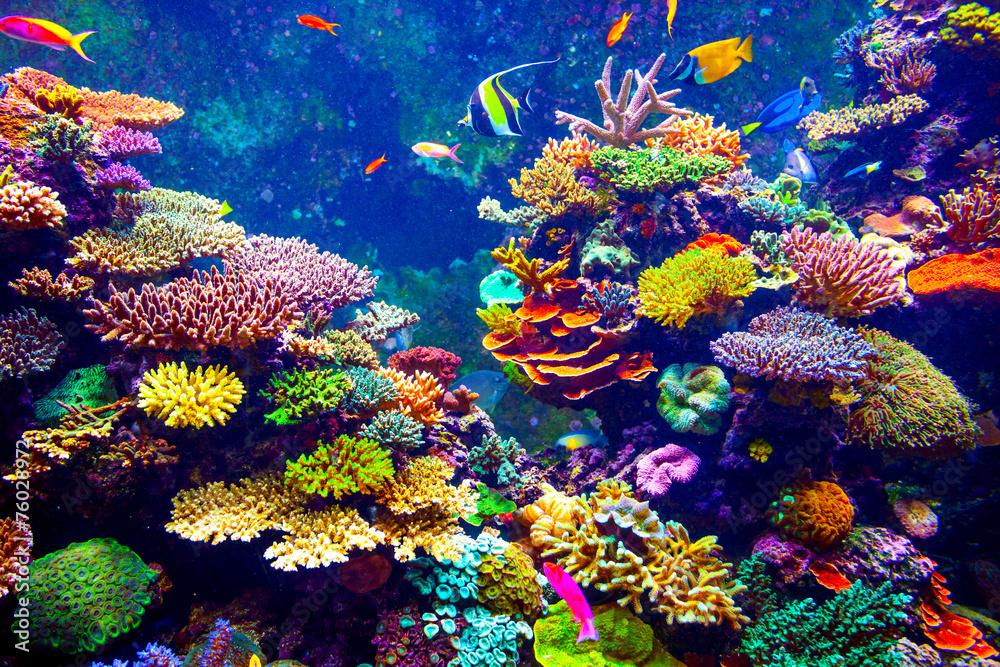 Fototapeta Singapore aquarium