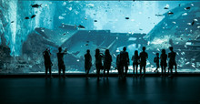 Large Aquarium In Singapore