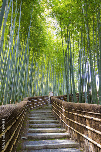 Bamboo forest walkway near adashinonenbutsuji temple, Kyoto