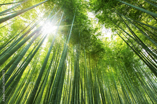 Montage in der Fensternische Bambus Bamboo forest Kyoto - Japan