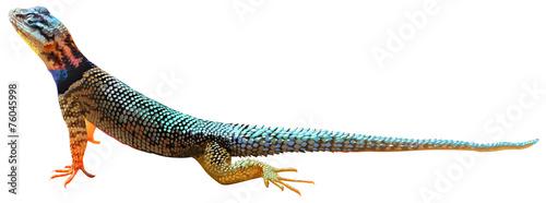 Fotografie, Obraz A lizard