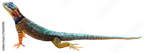 Fotografía A lizard
