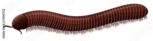 Leinwand Poster Centipede